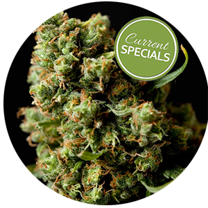 weekly-specials-tucson-cannabis-dispensary