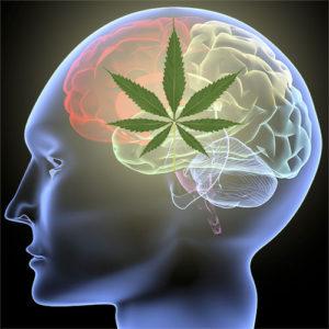 awareness-month-parkinsons-brain-medical-marijuana-treats