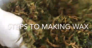 how-to-make-marijuana-wax-concentrates-saints