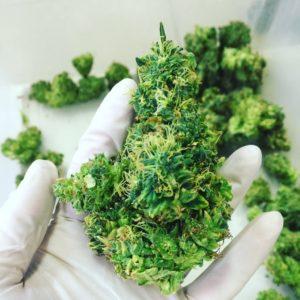 trimmed-cannabis-supercritical-SAINTS