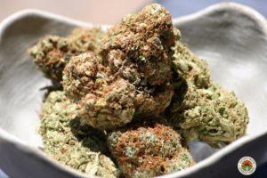 superskunk-greencrack-saints-MMJ-marijuana-strains