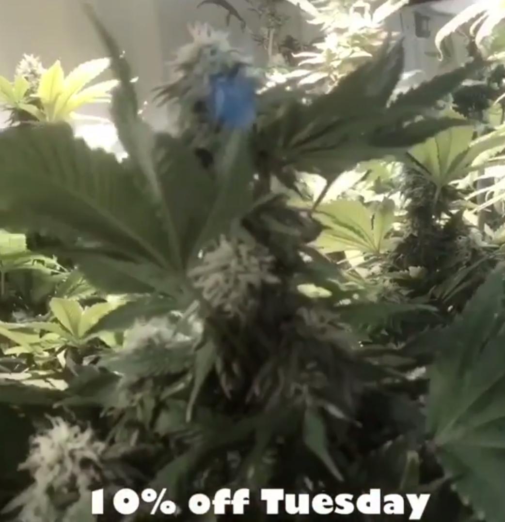 grow-marijuana-tucson-arizona