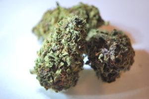 purplegrangtragedy