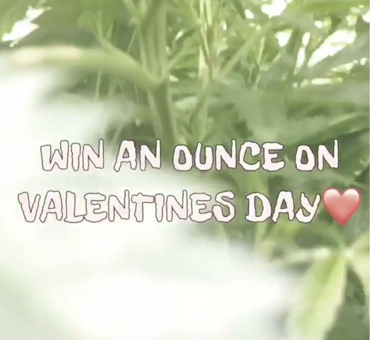 win-an-ounce-marijuana-tucson