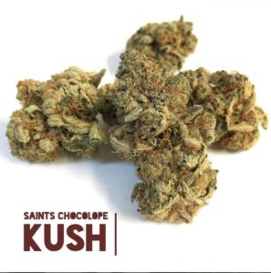 chocolope-kush-grown-by-saints