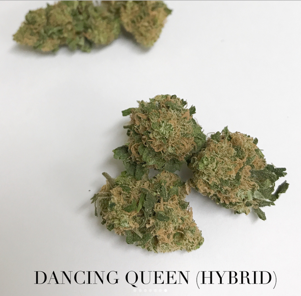 dancing queen hybrid strain tucson saints
