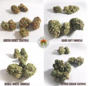 Green Beret (Sativa) Gods Gift (Indica) Noble White (Indica) Citrus Crack (Sativa)