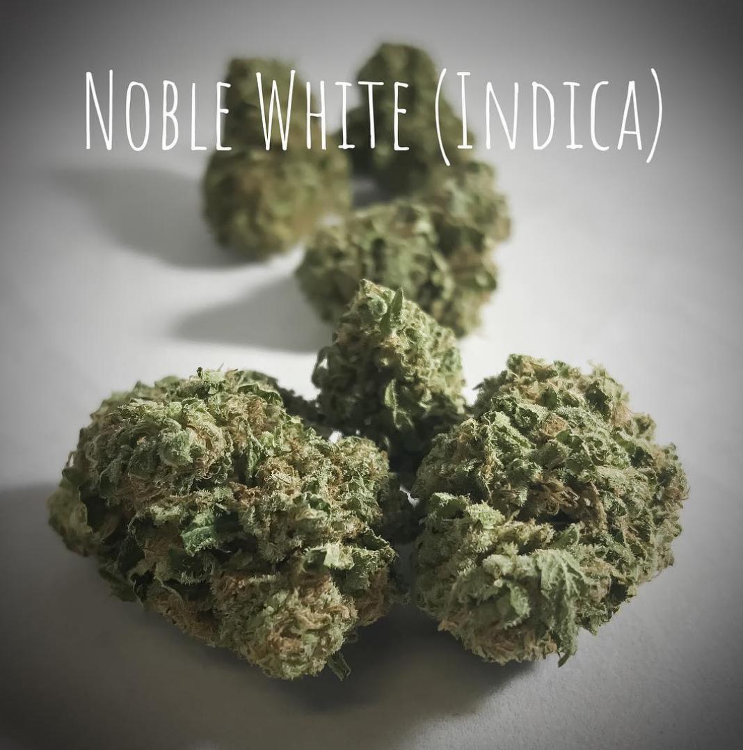Noble White indica strain