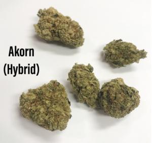 Akorn Hybrid Strain