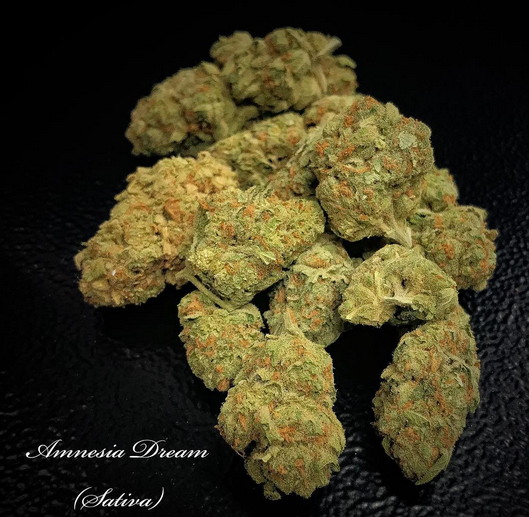 Amnesia Dream (Sativa)
