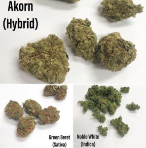 Green Beret Sativa Akorn Hybrid Noble White indica
