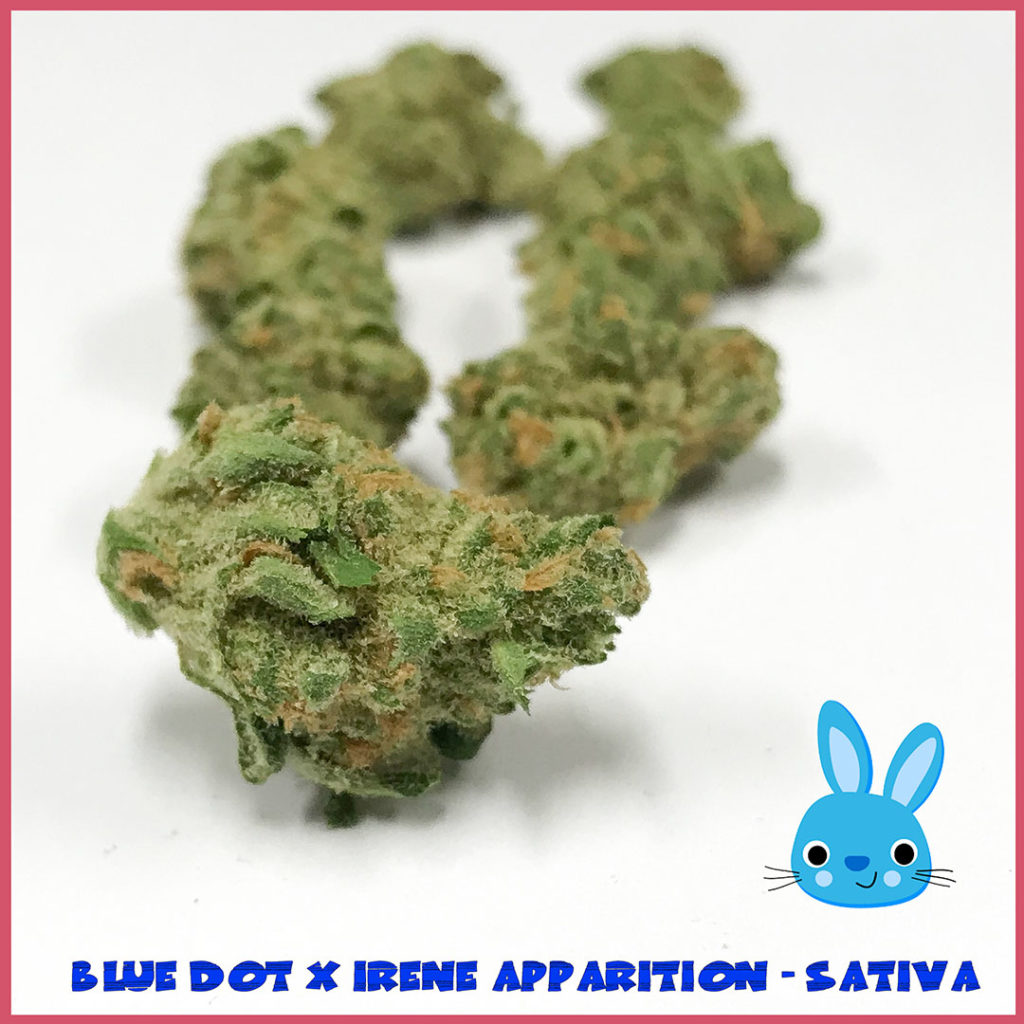 Blue-Dot-X-Irene-Apparition-Sativa-Easter-Tucson-saints