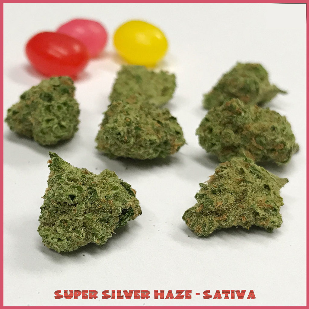 Super-Silver-Haze-Sativa-Easter-Tucson-saints
