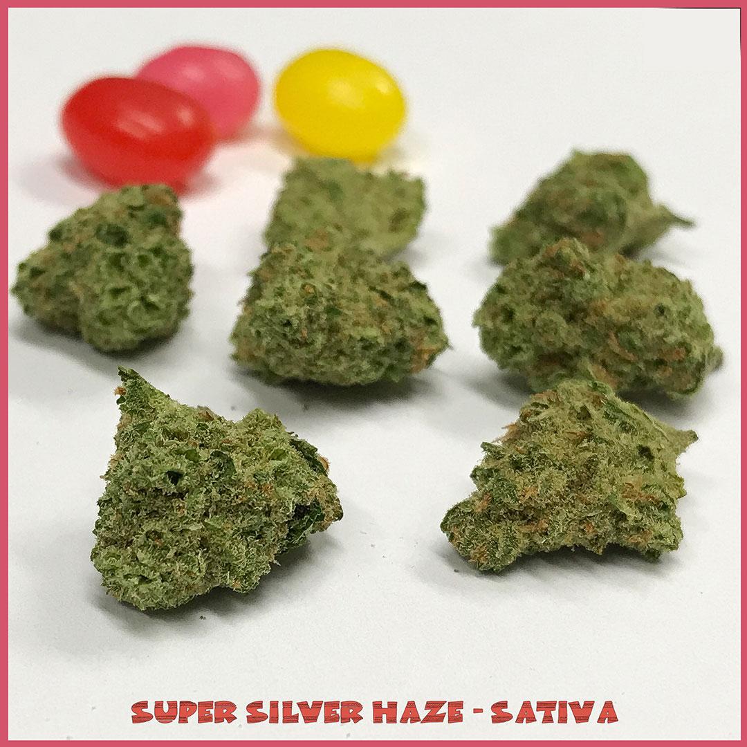 Super-Silver-Haze-Sativa-Easter-Tucson-saints | Tucson Dispensary SAINTS