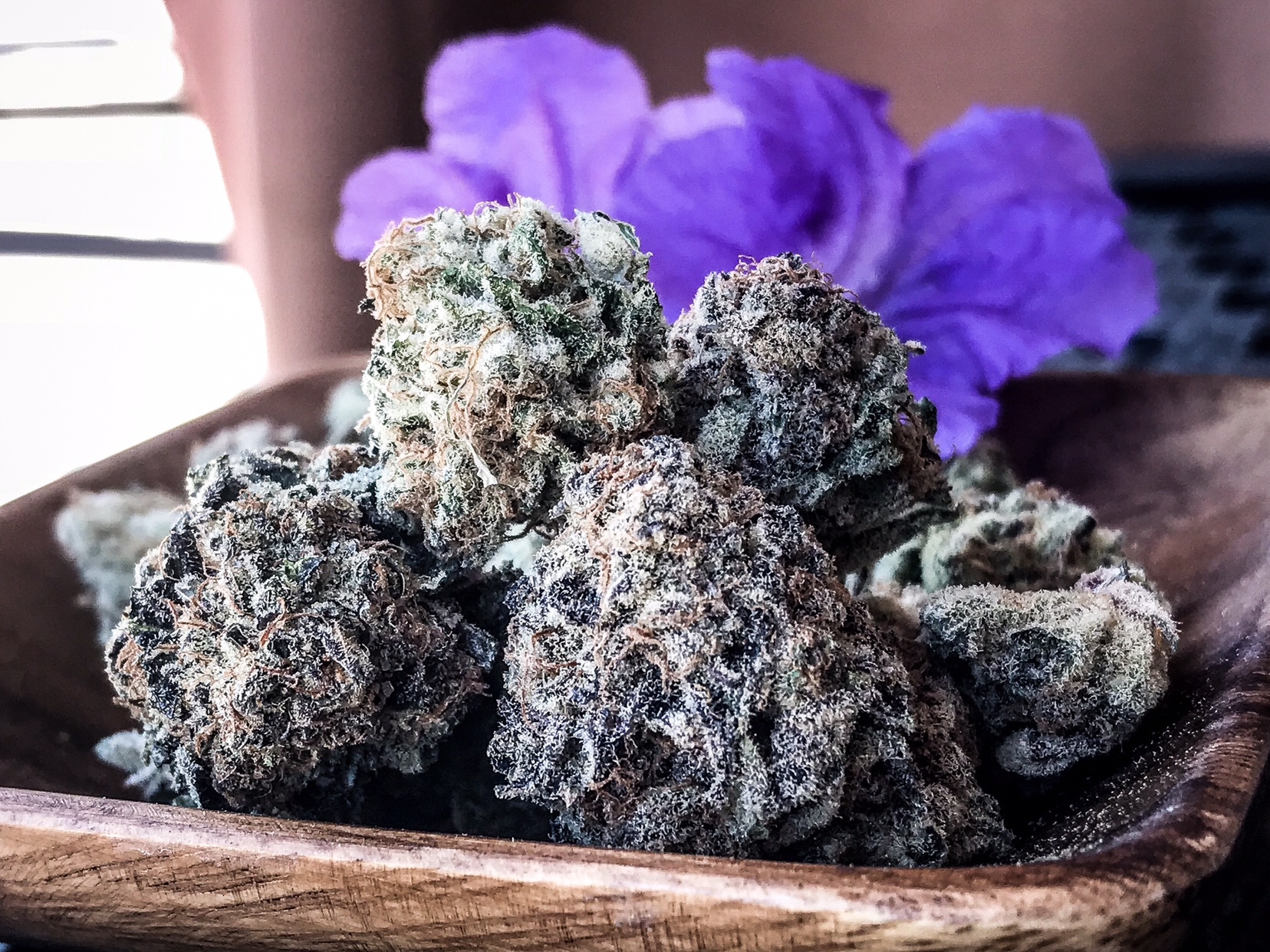 purple punch strain
