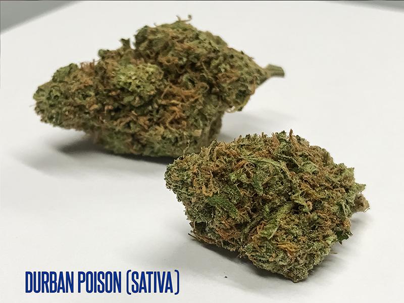 durban-poison-sativa-tucson-sm