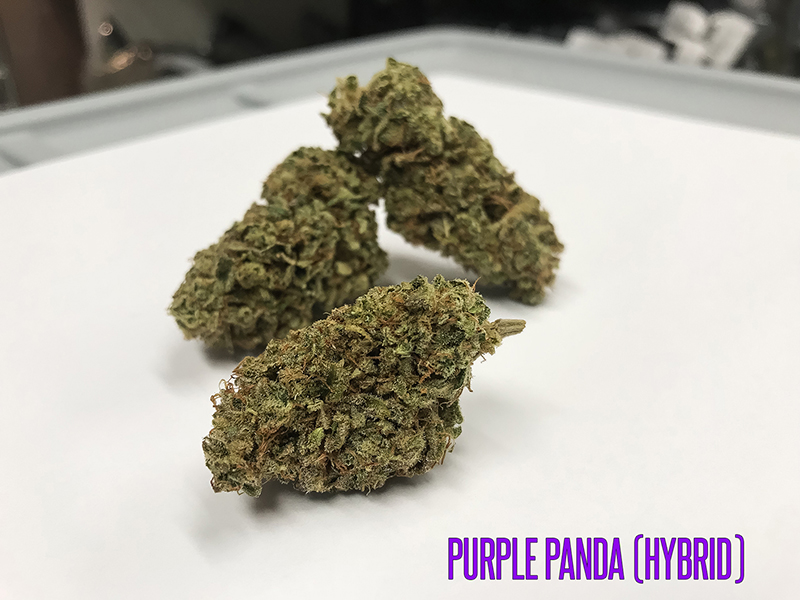 purple-panda-hybrid-tucson-saints-sm