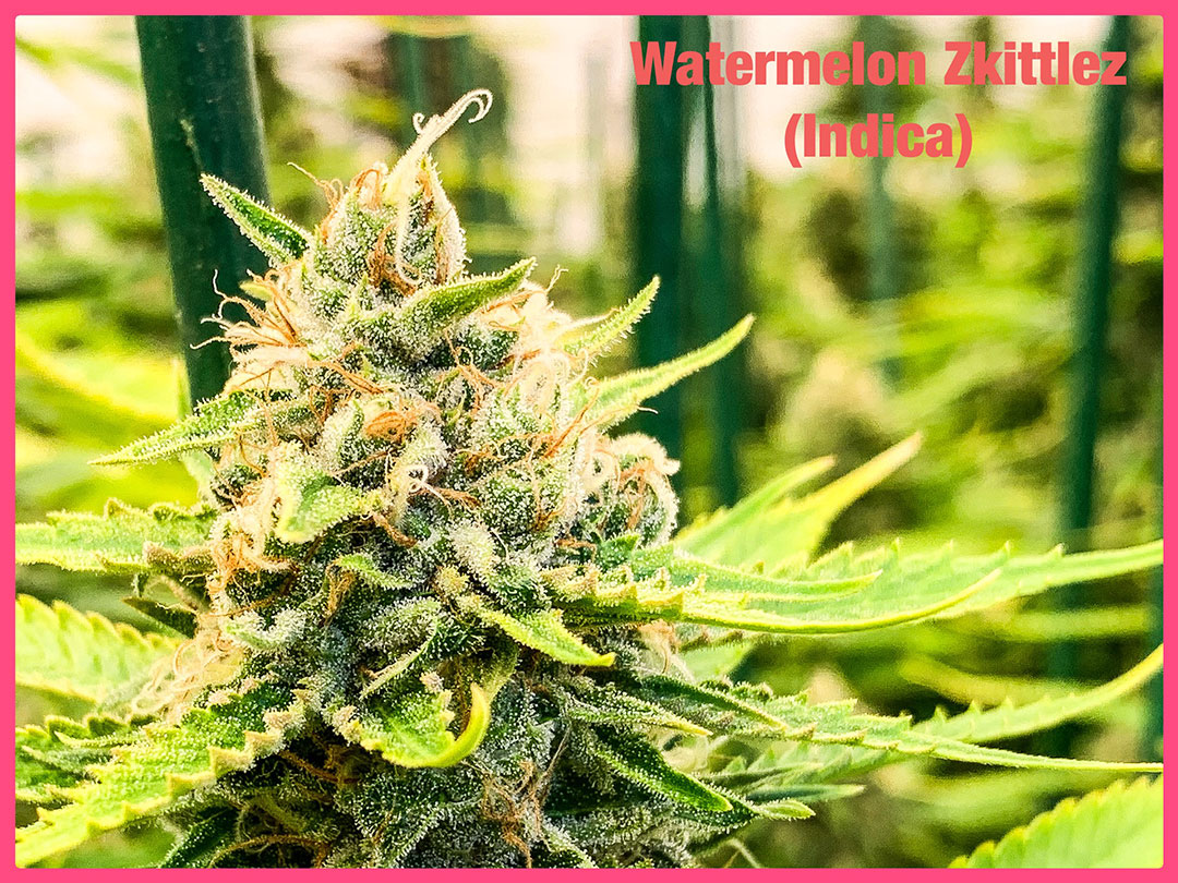 watermelon-zkittlez