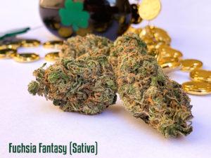 Fuchsia-Fantasy-sativa