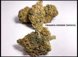 champa-cheese-cbd-indica