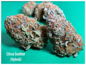 citrus soother hybrid sept 8