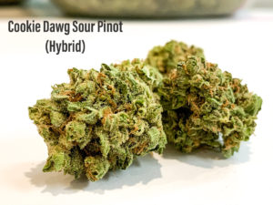 cookie dawg sour pinot hybrid strain
