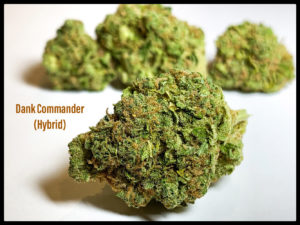 dank commander sept 8