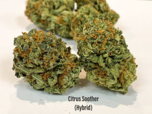 citrus soother strain tucson dispensary copy