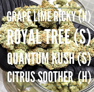 grape lime ricky royal tree saints 2019