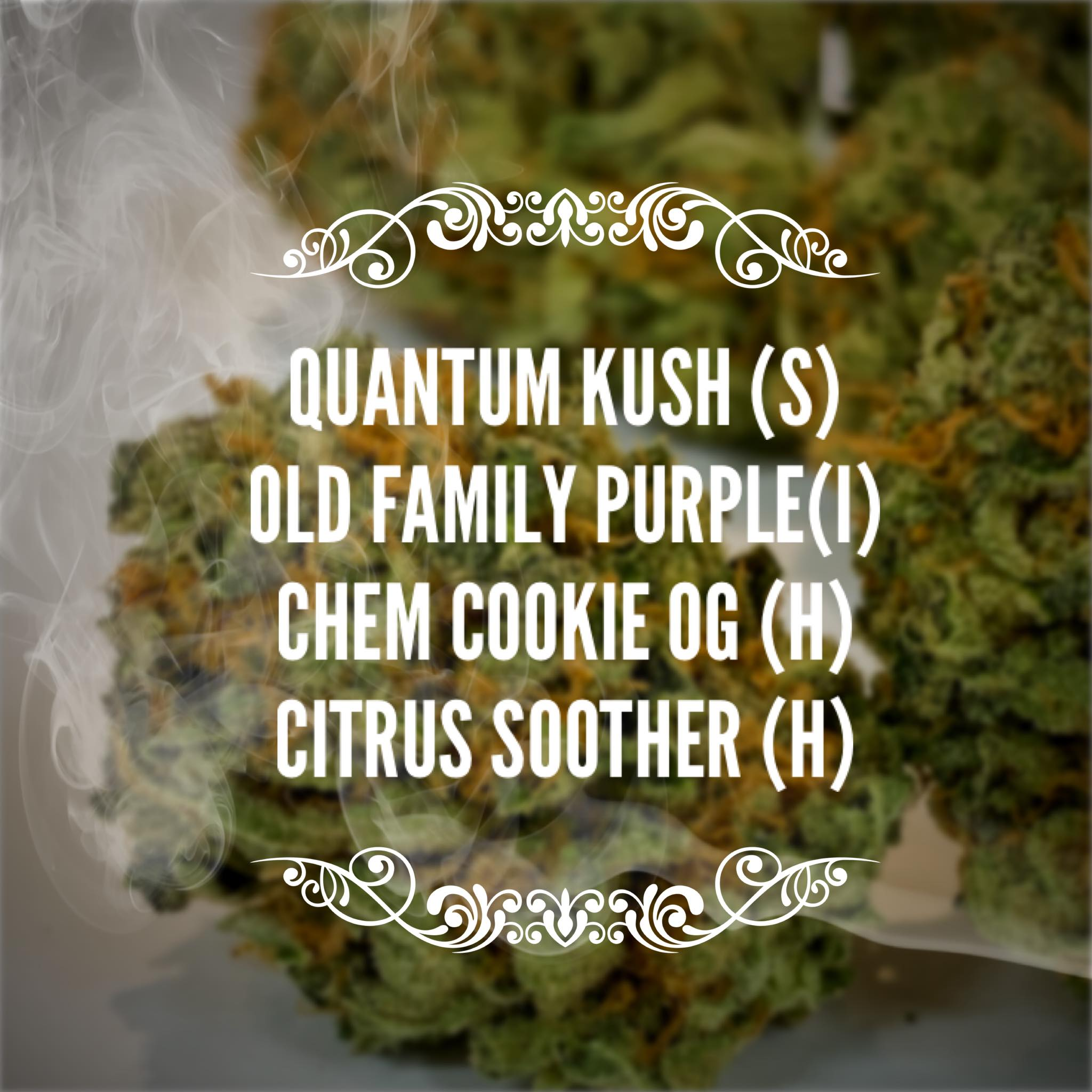 quantum kush old fam purp strains