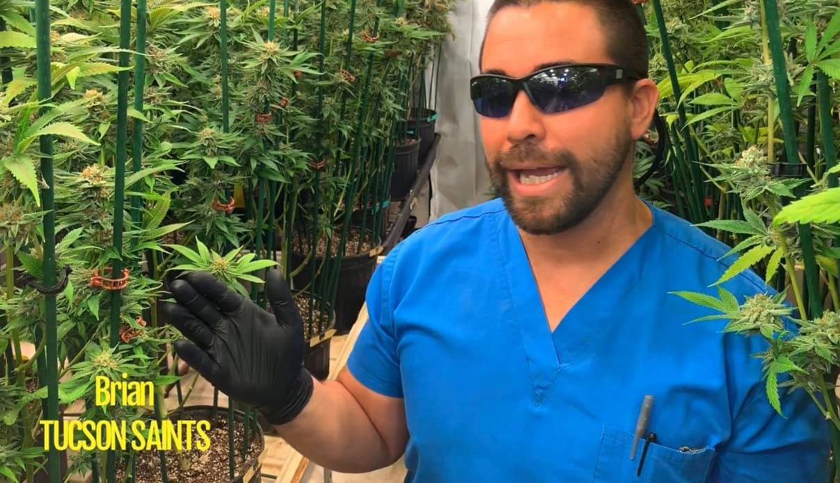 citrus soother strain review by marijuana grower