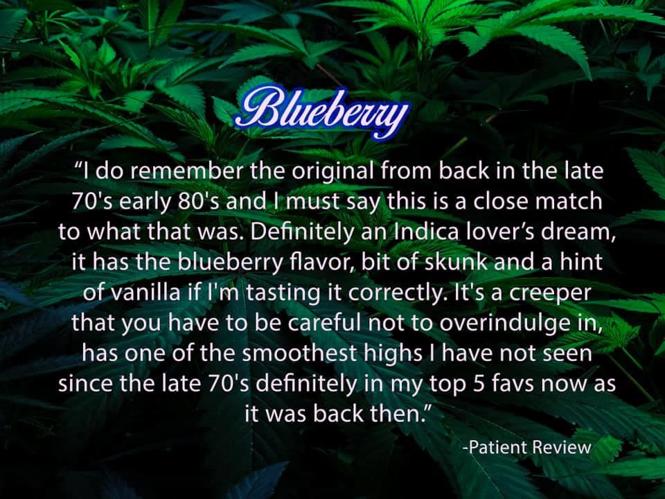 blueberry strain review patient tucson