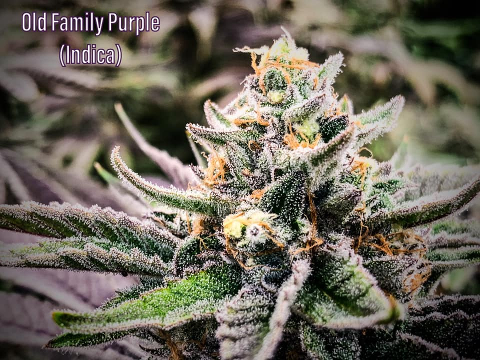 old family purple beautiful picture saints