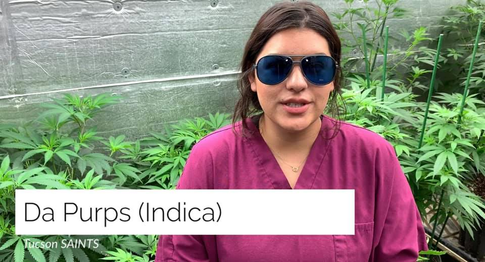 DaPurps strain review by Katy Tucson SAINTS Dispensary