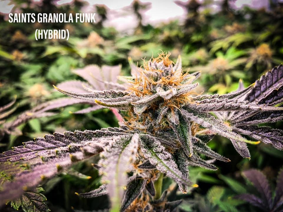 Granola Funk strain tucson saints dispensary