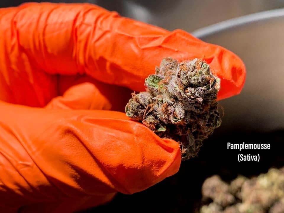 pamplemousse strain cannabis arizona