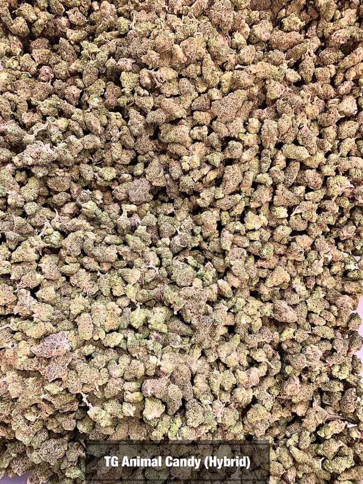 Tierra Grow Animal Candy Hybrid Tucson SAINTS
