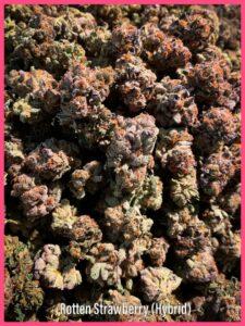Rotten Strawberry strain saints