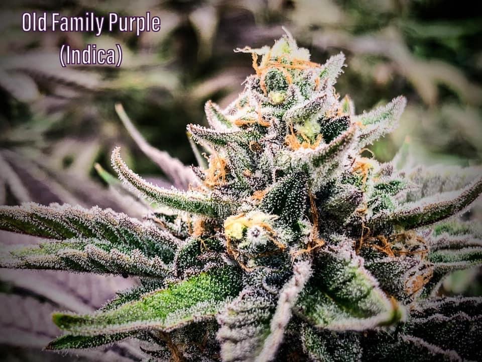 old family purple saints oct 2020