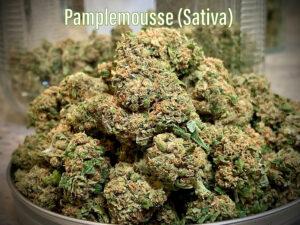 pamplemousse saints strain