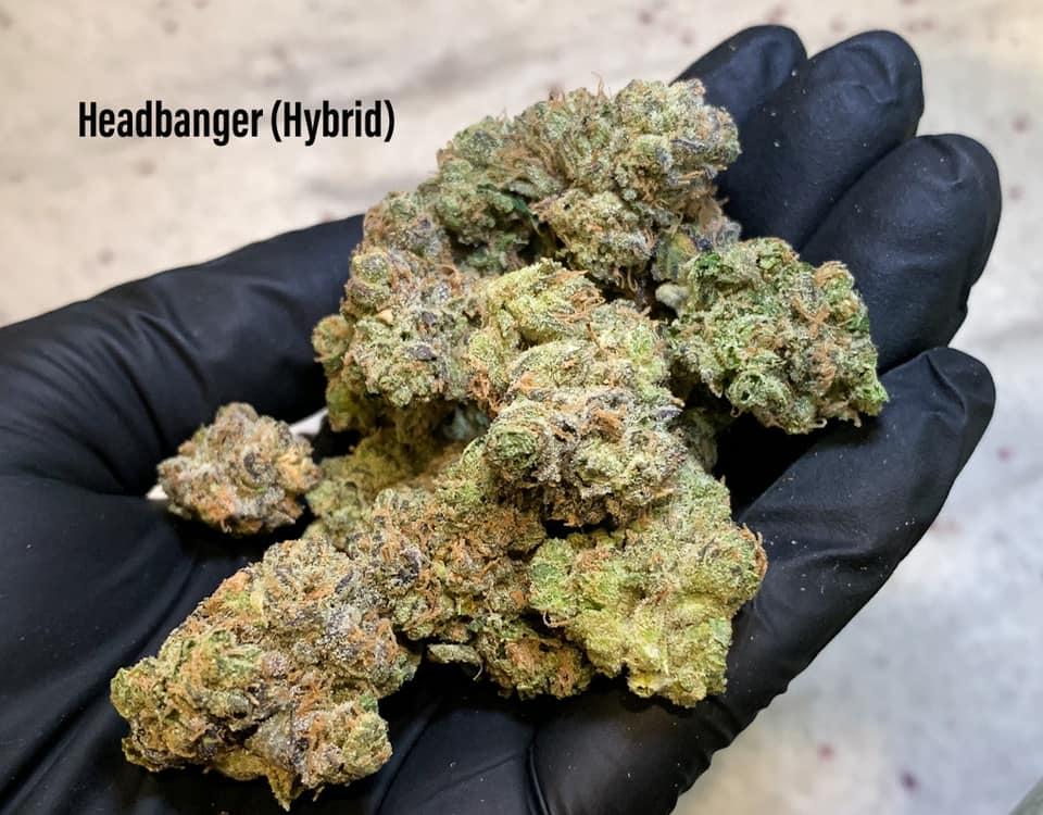 Headbanger Strain Tucson SAINTS Dispensary.jpg