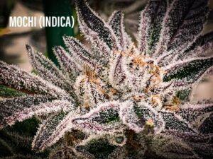mochi strain indica tucson dispensary