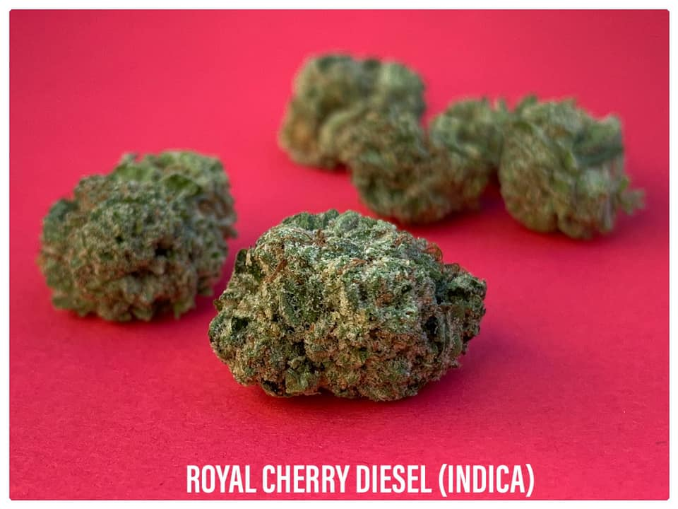 Royal Cherry Diesel Indica