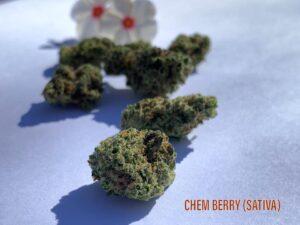 Sativa ChemBerry Strain