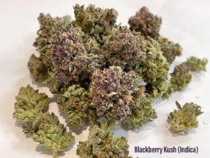 blackberry kush indica strain tucson saints dispensary