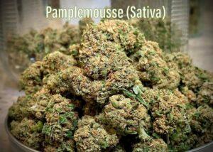 pamplemousse strain tucson saints dispensary 2021