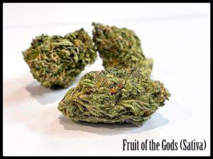 Fruit of the Gods Sativa weed