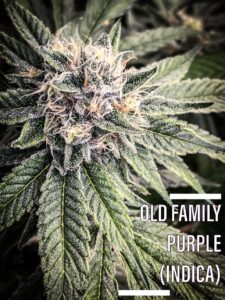 Old Family Purple painreliever dispensary tucson