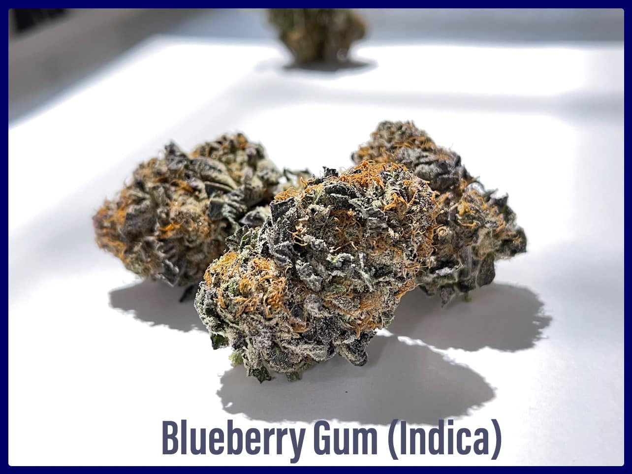 blueberry gum indica strain weed