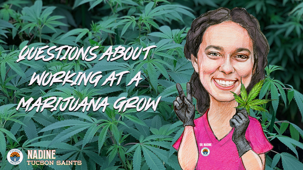 Nadine Inside SAINTS Answer questions about cannabis jobs 2021
